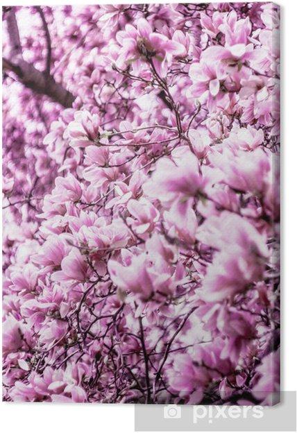 Obraz na płótnie Kwiat kwiat magnolii - Tematy