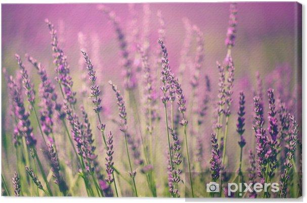 Obraz na płótnie Kwiat lawendy -