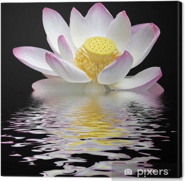 Obraz na płótnie Kwiat lotosu na czarnym tle - Kwiaty