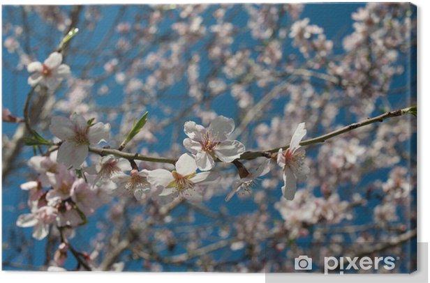Obraz na płótnie Kwiat migdałów - Kwiaty