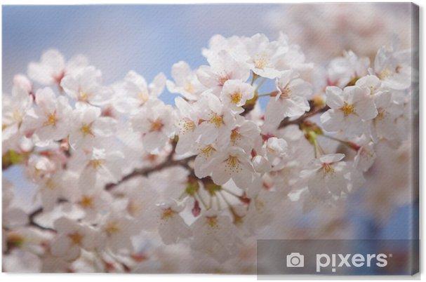 Obraz na płótnie Kwiat wiśni sakura w Tokio w Japonii w sezonie 2014 sakura - Tematy
