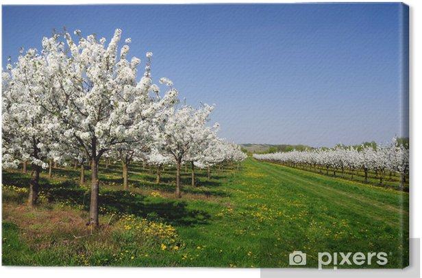 Obraz na płótnie Kwiat wiśni - Pory roku