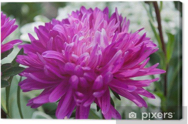 Obraz na płótnie Kwiat - Kwiaty