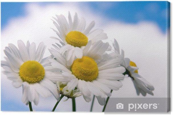 Obraz na płótnie Kwiatów Rumianek na szerokie pole - Kwiaty
