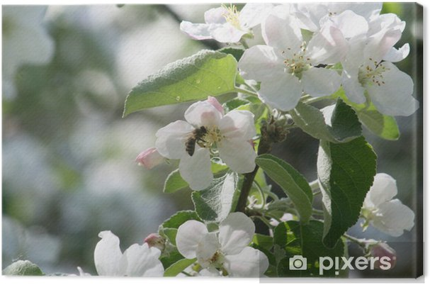 Obraz na płótnie Kwiaty jabłoni i pszczoła - Pory roku