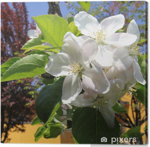 Obraz na płótnie Kwiaty jabłoni - Pory roku