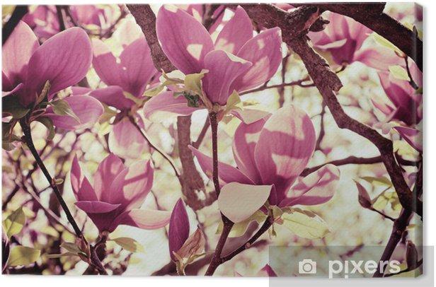 Obraz na płótnie Kwiaty magnolii - Tematy