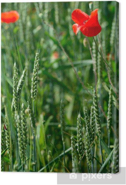 Obraz na płótnie Kwiaty - Maki - Wheat - Kwiaty