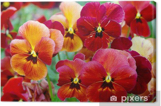 Obraz na płótnie Kwiaty Pansy - Kwiaty