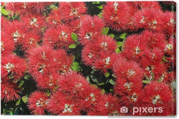 Obraz na płótnie Kwiaty pohutukawa - Kwiaty