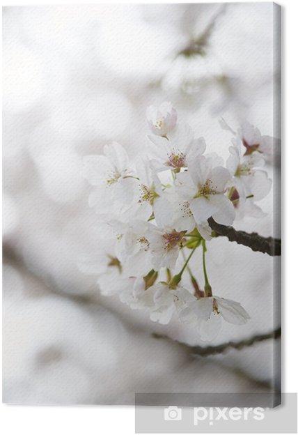 Obraz na płótnie Kwiaty wiśni - Święta Narodowe