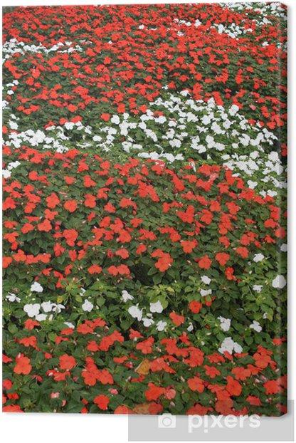 Obraz na płótnie Kwiaty z kolorami włoskiej flagi - Kwiaty