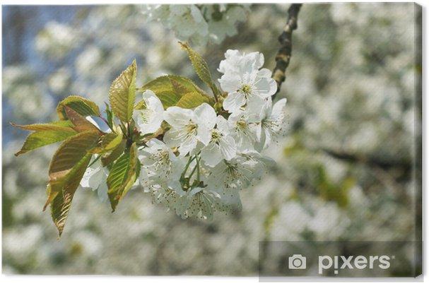 Obraz na płótnie Kwitnąca wiśnia - Pory roku