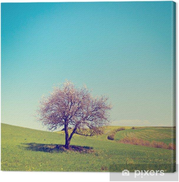 Obraz na płótnie Kwitnące drzewo - Pory roku