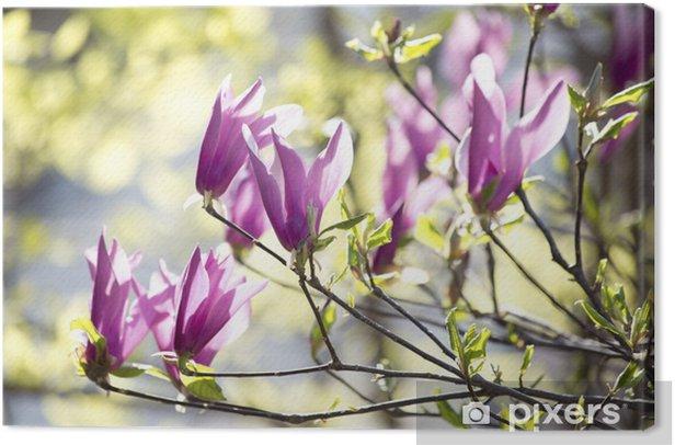 Obraz na płótnie Kwitnące magnolie - Tematy