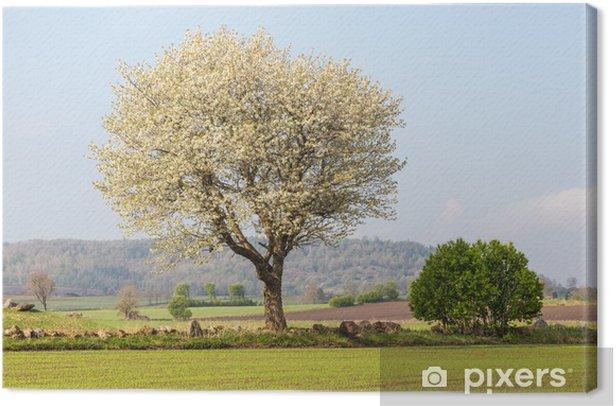 Obraz na płótnie Kwitnące wiśniowe drzewo - Pory roku