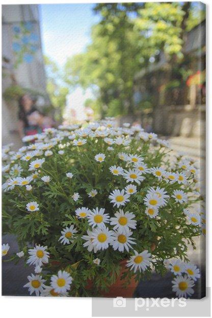 Obraz na płótnie Kwitnący kwiat obraz na ulicach Paryża - Miasta europejskie