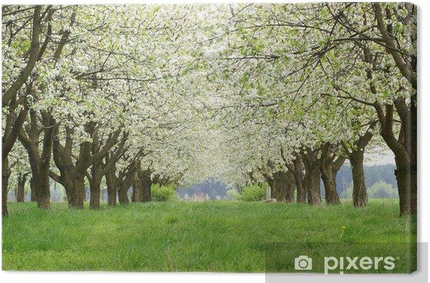 Obraz na płótnie Kwitnący sad wiśniowy - Tematy