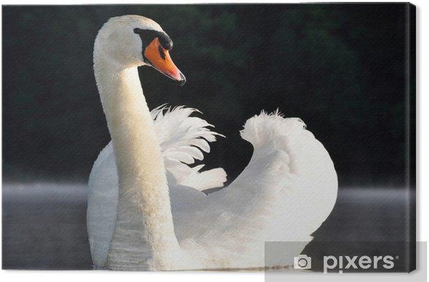 Obraz na płótnie Łabędź na jeziorze - Zwierzęta