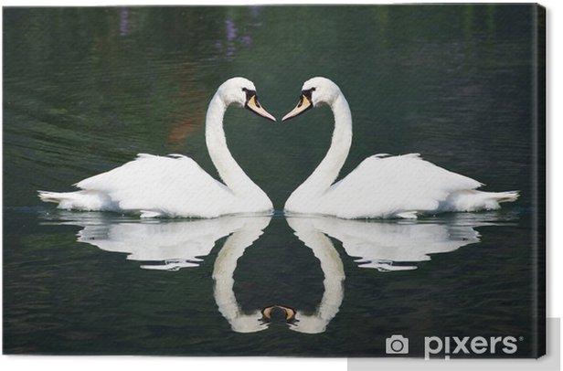 Obraz na płótnie Łabędzie miłość - Łabędzie