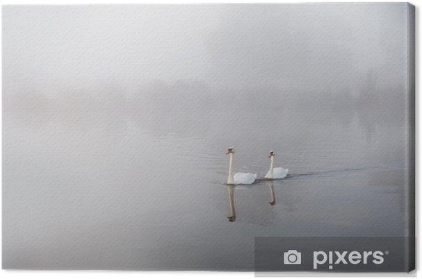 Obraz na płótnie Łabędzie nieme Cygnus olor szybownictwo nad jezioro pokryte mgła o świcie - Łabędzie