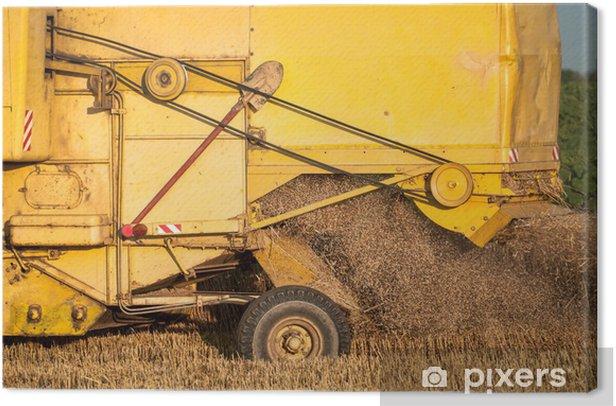 Obraz na płótnie Łączenie zbiorów pszenicy - Rolnictwo
