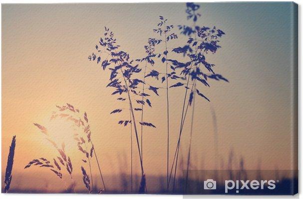 Obraz na płótnie Łąka o zachodzie słońca, zen medytacyjne sceny - Krajobrazy