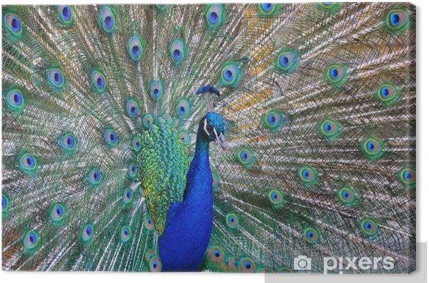 Obraz na płótnie Łapa - Ptaki