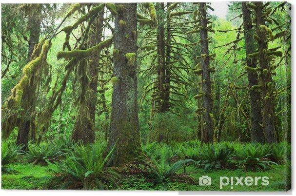 Obraz na płótnie Las deszczowy - Tematy