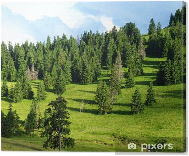 Obraz na płótnie Las sosnowy - Sporty na świeżym powietrzu