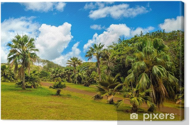 Obraz na płótnie Las tropikalny - Krajobrazy