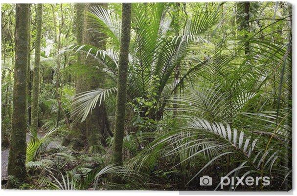 Obraz na płótnie Las tropikalny - Lasy