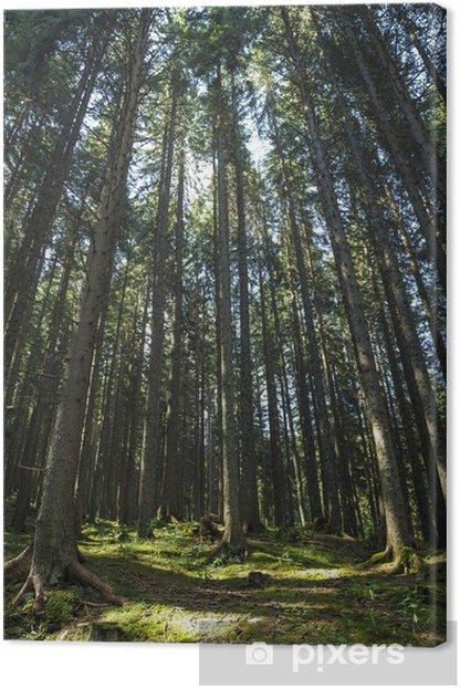 Obraz na płótnie Las w Trentino Alto Adige - Lasy