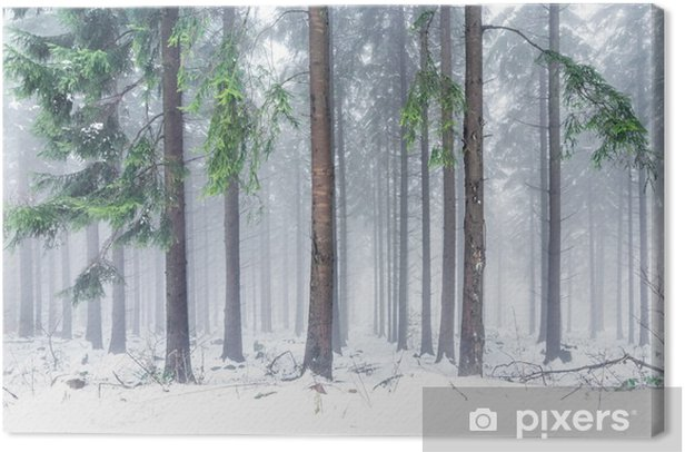 Obraz na płótnie Las w zimie - Krajobrazy