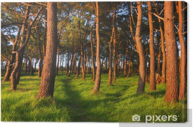 Obraz na płótnie Las wiosną z ostatnich promieni słońca - Lasy