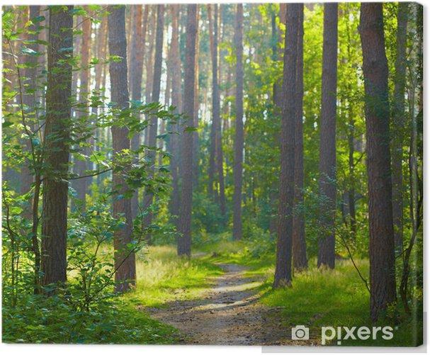 Obraz na płótnie Lasów sunrise - Tematy