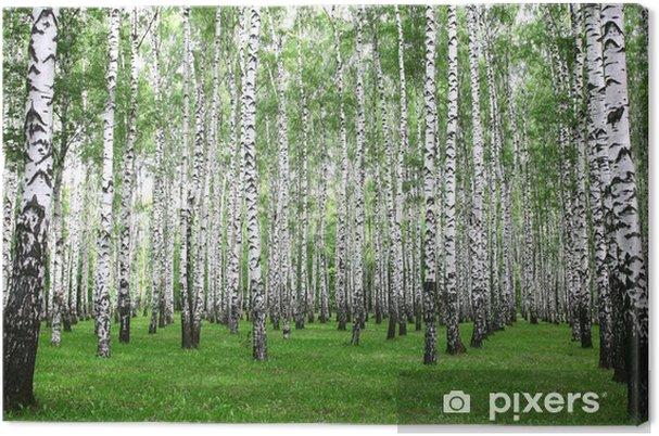 Obraz na płótnie Lato brzozowy las w godzinach porannych - Tematy