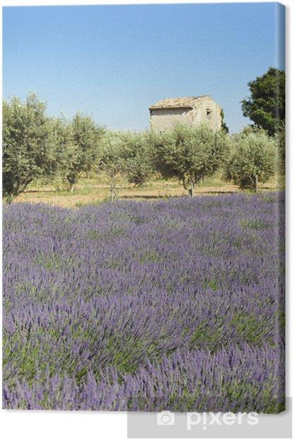 Obraz na płótnie Lavender gruntu - Rolnictwo