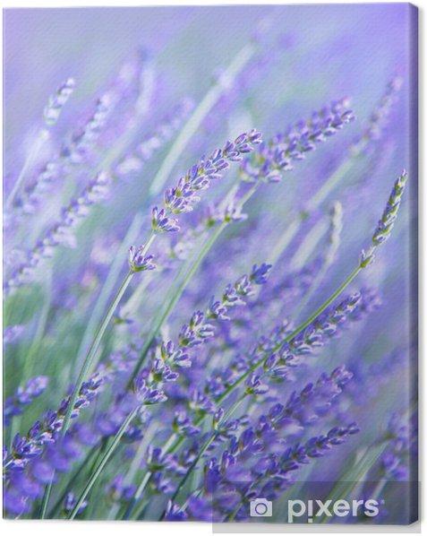 Obraz na płótnie Lavender kwiat pola - Tematy