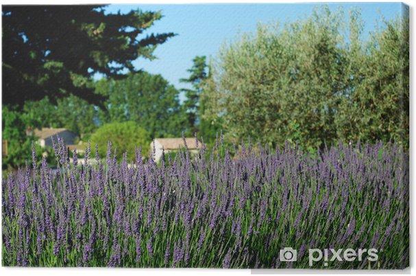 Obraz na płótnie Lawenda kwiaty kwitnące w lecie, Prowansja, Francja - Kwiaty