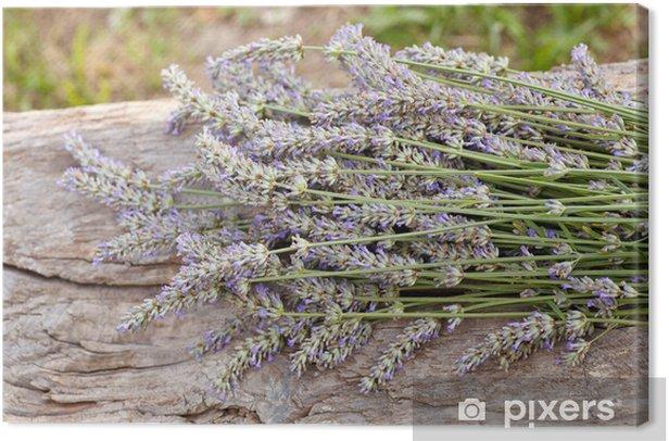 Obraz na płótnie Lawenda - Kwiaty
