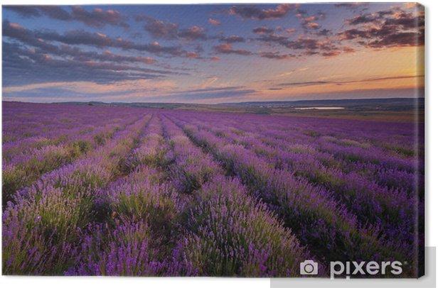 Obraz na płótnie Lawendowe pole na zachód słońca - Tematy