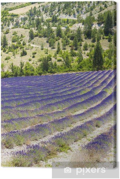 Obraz na płótnie Lawendowe pole w pobliżu Tavard, Rhone-Alpes, France - Europa