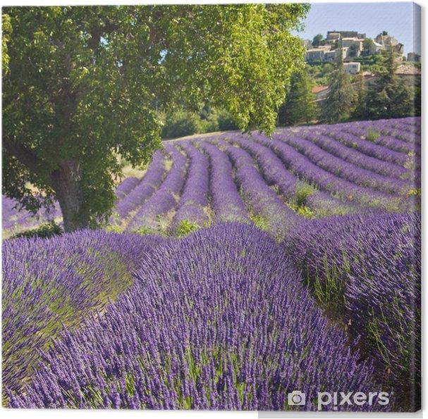Obraz na płótnie Lawendowe pole w Vachères - Rolnictwo