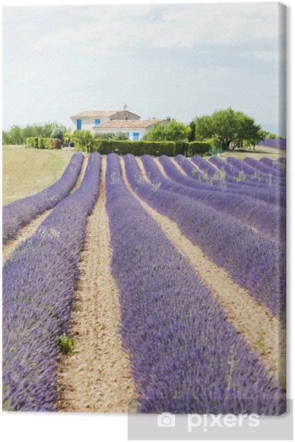 Obraz na płótnie Lawendowego pola, Plateau de Valensole, Provence, Francja - Europa