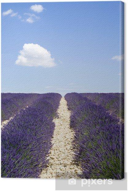 Obraz na płótnie Lawendowego pola, Valensole, Francja - Tematy