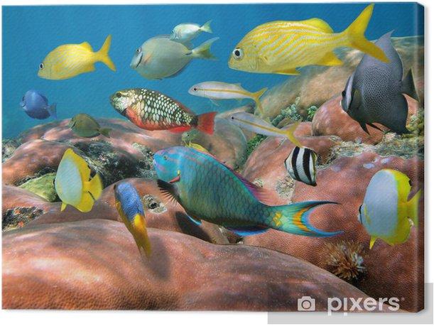 Obraz na płótnie Ławica ryb nad rafą koralową - Rafa koralowa