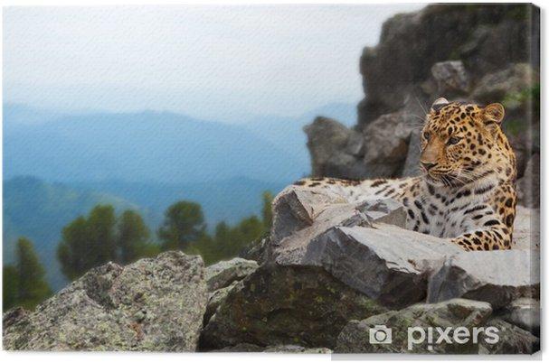 Obraz na płótnie Leopard na skale - Ssaki