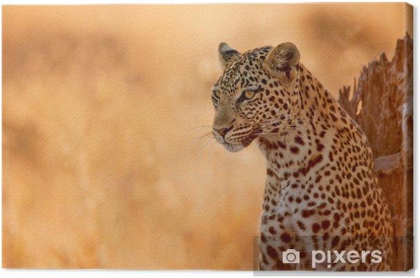 Obraz na płótnie Leopard o zachodzie słońca - Afryka