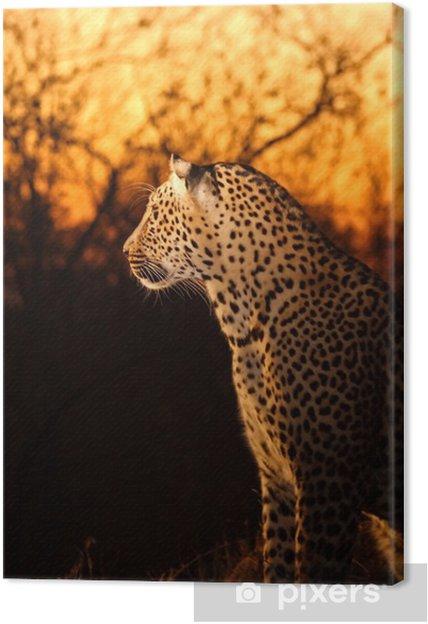 Obraz na płótnie Leopard w Sabi Sands - Ssaki